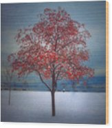 The Winter Berries Wood Print