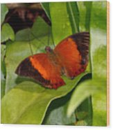 The Wizard Butterfly Wood Print