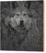 The Wolf Bw Wood Print