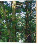 The Woodpecker Wood Print