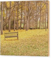 The Yellow Leaves Of Fall Carpet The Ground Of A Ginkgo Biloba Grove. Cm3 Wood Print