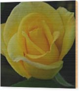 The Yellow Rose Of Texas Wood Print