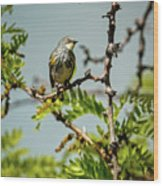 The  Yellow-rumped Warbler Wood Print