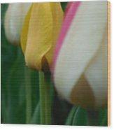 The Yellow Tulip Wood Print