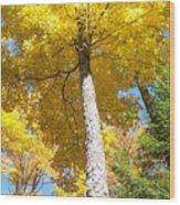 The Yellow Umbrella - Photograph Wood Print