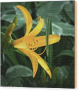 The Yelloy Lily Wood Print