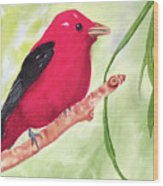 Theodore Tanager Wood Print