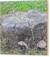 There Is A Fungus Among Us Wood Print