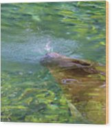 There She Blows Manatee Wood Print