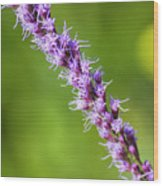 There You Are Blazing Star Wood Print
