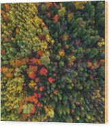 These Are Trees Wood Print
