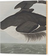 Thick-billed Murre Wood Print
