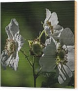 Thimbleberry Blossoms Wood Print