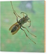 Thin Waisted Wasp On Door Glass     October  Indiana Wood Print