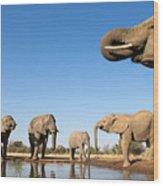 Thirsty Elephants Wood Print
