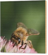 Thirsty For Nectar Wood Print