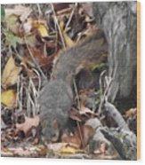 Thirsty Squirrel Wood Print