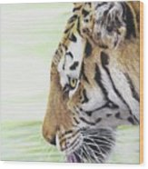 Thirsty Tiger Wood Print