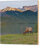 This Is Alberta 10 - Bucks Sunset Snack Wood Print