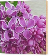 This Lilac Has Flowers With A White Edging. 4  Wood Print