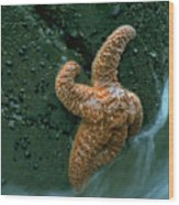 This Starfish Has A Good Grip Wood Print