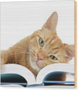 This Tabby Cat Loves Books  Wood Print