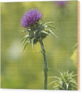 Thistle And Mustard Wood Print