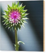 Thistle Bloom Wood Print