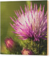 Thistle Flowers Wood Print
