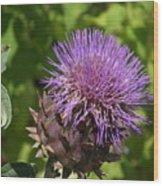 Thistle In Bloom Wood Print