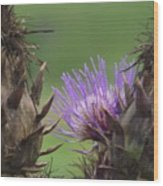 Thistle In Hiding Wood Print