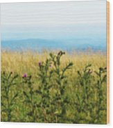 Thistle On The Blue Ridge Wood Print