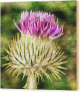 Thistle - The Flower Of Scotland Watercolour Effect. Wood Print