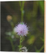 Thistles Morning Dew Wood Print