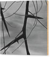 Thorns In Silouette Wood Print