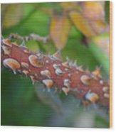 Thorns Wood Print