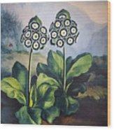 Thornton: Auriculas Wood Print