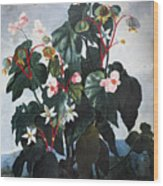 Thornton: Begonia Wood Print
