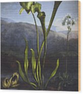 Thornton: Bog Plants Wood Print