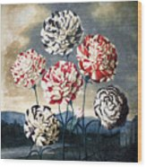 Thornton: Carnations Wood Print