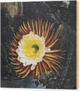 Thornton: Cereus Wood Print