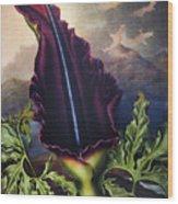 Thornton: Dragon Arum Wood Print