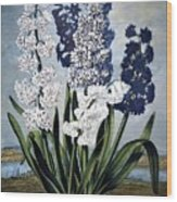 Thornton: Hyacinths Wood Print