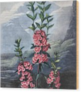 Thornton: Kalmia Wood Print