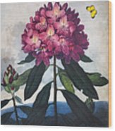 Thornton: Rhododendron Wood Print