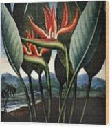 Thornton: Strelitzia Wood Print