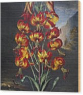 Thornton: Superb Lily Wood Print