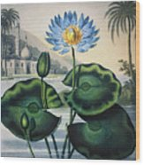 Thornton: Water Lily Wood Print