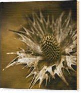 Thorny Crown Wood Print