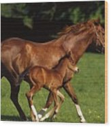 Thoroughbred Chestnut Mare & Foal Wood Print